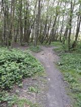 Trail es geht wieder zurück (2)