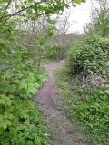 Trail rauf und runter (1)
