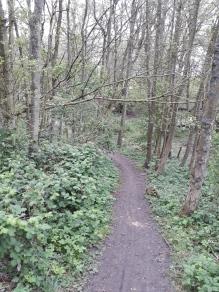 Trail rauf und runter (4)