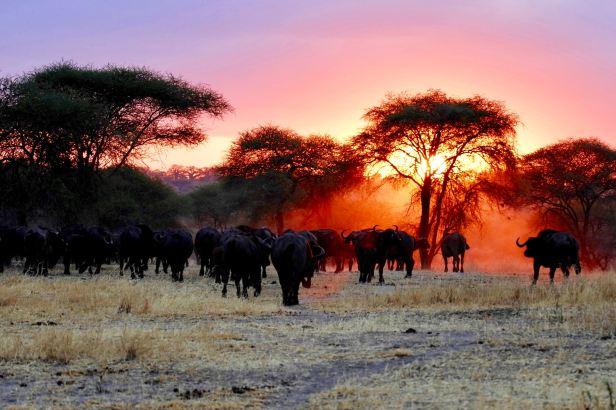 Serengeti Nationalpark_Tansania_ray-rui-0mqrqbwjKc4-unsplash