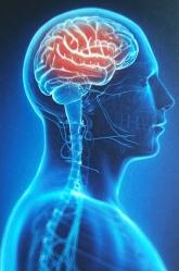 Neuroathletik (3)
